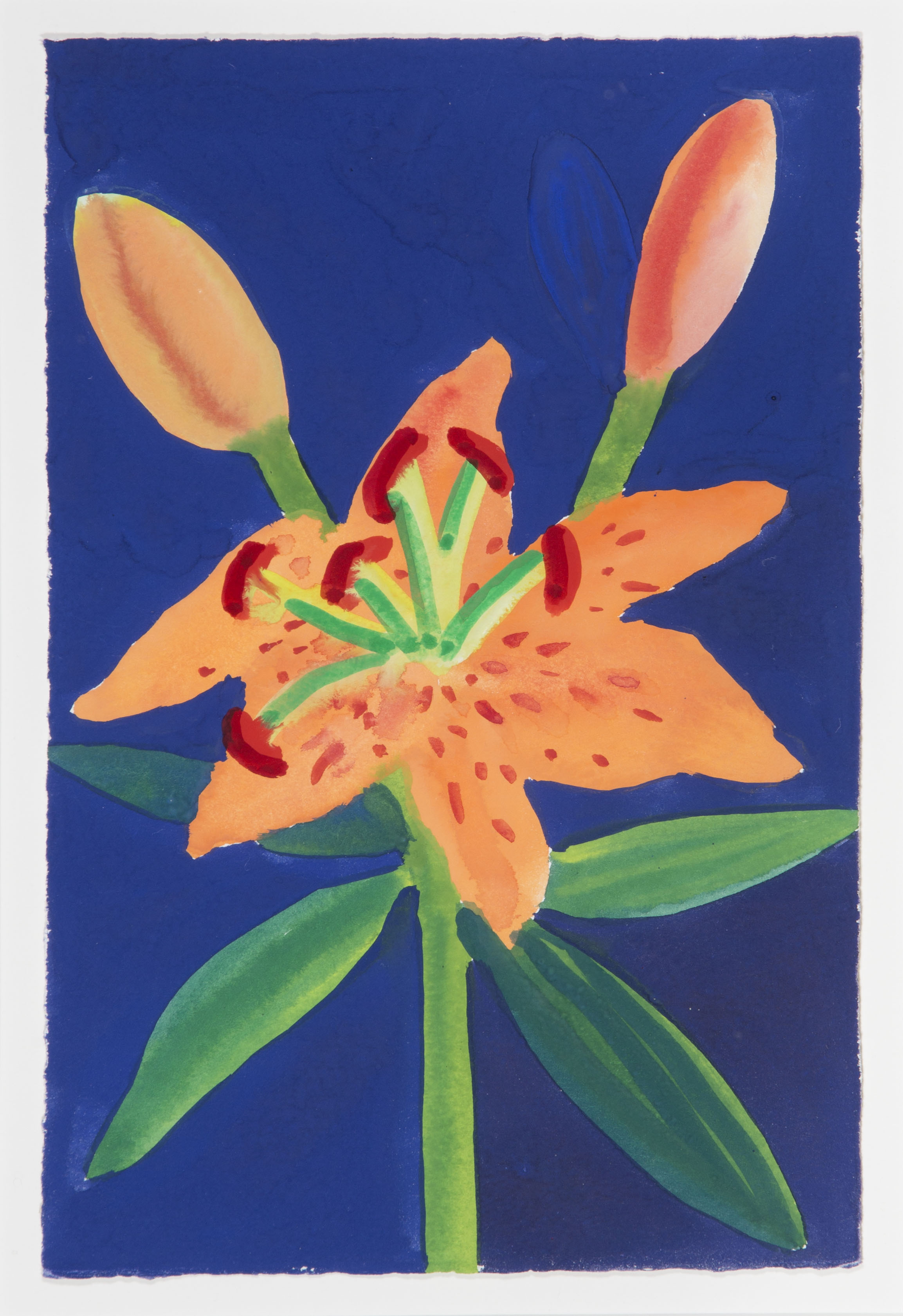 Apricot Lily on Ultramarine and Black [dyj-98]