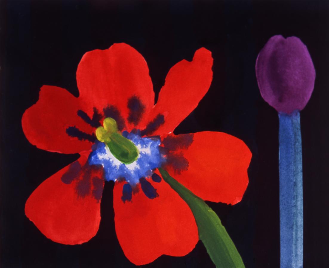 Open Red Tulip  with Purple Tulip [023-00]