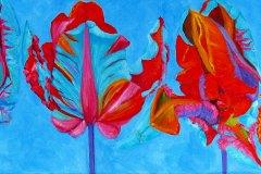 Lif-of-a-Blumex-Tulip3
